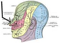 【盘点】近期听力损失研进展