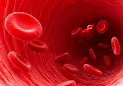 "Cell <font color=""red"">Stem</font> Cell:鼓动人心!更新更有效的干细胞移植方法可以帮助血癌患者"