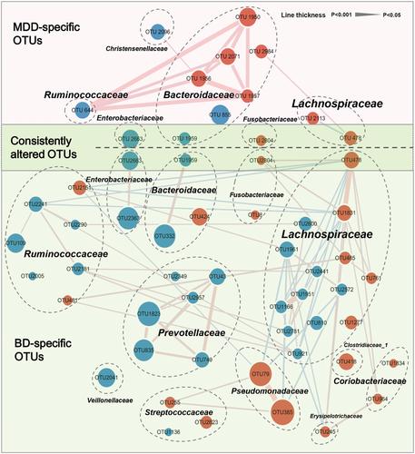 Adv Sci: 肠道微生物组可以鉴别单相抑郁症和双相抑郁症