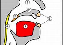Eur Arch Otorhinolaryngol:慢性肾脏疾病中红细胞分布宽度与听力损伤相关