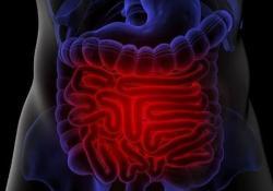Gastroenterology:维甲酸和淋巴毒素信号可以促进人类肠道M细胞的分化