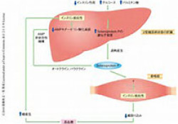 "Diabetologia:单次阻力运动可提高<font color=""red"">超重</font>/肥胖男性糖尿病前期患者的餐后血脂代谢率"