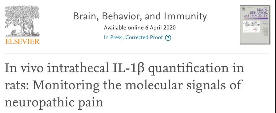 Brain, Behavior, and Immunity:慢性疼痛与免疫系统密不可分