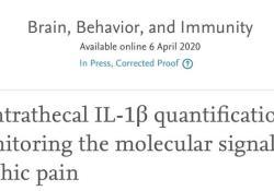 "Brain, Behavior, and Immunity:慢性疼痛与<font color=""red"">免疫</font><font color=""red"">系统</font>密不可分"