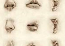 Laryngoscope:过敏性鼻炎患者免疫治疗前后细菌性鼻微生物比较