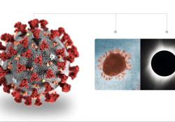 "Clin Infect Dis:SARS-COV-2感染患者的<font color=""red"">定量</font>检测和病毒载<font color=""red"">量分析</font>"
