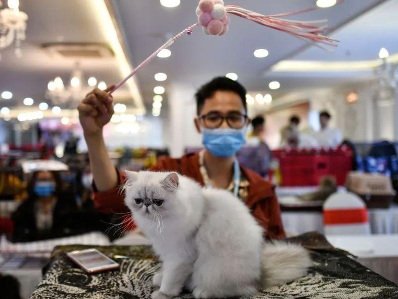 Nature:猫能感染新冠病毒——狗不易感