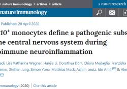 """Nat Immunol:<font color=""""red"""">多发</font><font color=""""red"""">性</font>硬化症有了新的治疗选择"""