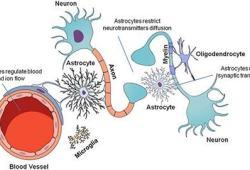 Lancet Neurology:Satralizumab治疗视神经脊髓炎谱系障碍(NMOSD),安全有效