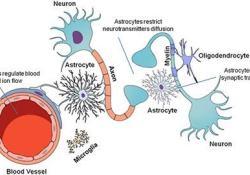"<font color=""red"">Lancet</font> <font color=""red"">Neurology</font>:Satralizumab治疗视神经脊髓炎谱系障碍(NMOSD),安全有效"