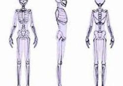 "2020 ASIPP官方立场声明:骨髓浓缩物(BMC)治疗肌肉<font color=""red"">骨骼</font>疾病"