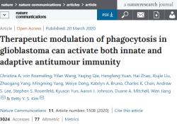 Nat Commun:新突破,免疫系统吞噬癌细胞的胃口增大