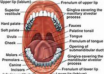 J Periodontal Res:LncRNA-01126通过MEK/ERK信号通路抑制人牙周膜细胞迁移
