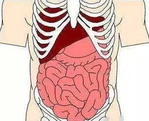 Blood:小肠类器官成功重现对T细胞介导的组织损伤的易感性