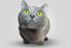 PLOS GENET:青光眼背后的遗传机制被发现了