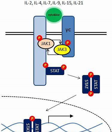 瑞德西韦联合JAK抑制剂治疗COVID-19:ACTT 2试验即将开展