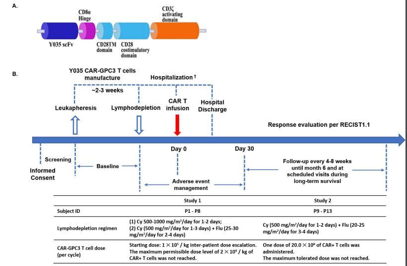 科济生物靶向GPC3的CAR-T细胞治疗晚期肝细胞癌的1期结果公布,初步取得显著疗效