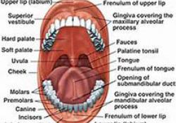 """J Periodontal Res:口腔炎症<font color=""""red"""">负载</font>:口腔健康的标志物-中性粒细胞"""