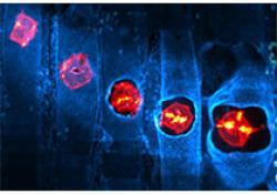 "Journal of Neuroscience:发现乙酰胆碱<font color=""red"">调控</font>大脑学习记忆新机制"