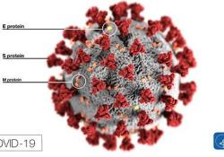 "<font color=""red"">免疫</font><font color=""red"">球蛋白</font>Octagam治疗严重COVID-19患者:FDA已批准研究性新药申请"