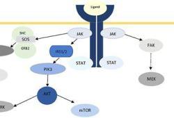 耐药性晚期癌症如何治疗?靶向耐药途径IRS1/2和STAT3的NT219即将进行I/II期临床试验