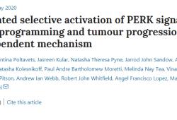 Nat Cell Bio:晚期乳腺癌患者中找到一种神秘蛋白,有望治疗乳腺癌