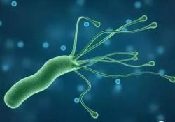 AJG: 幽门螺杆菌的治疗与未来艰难梭菌感染无关