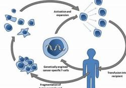 "T细胞疗法DSG3-CAART获得FDA快速通道认证:用于治疗寻常型粘膜<font color=""red"">天疱疮</font>"