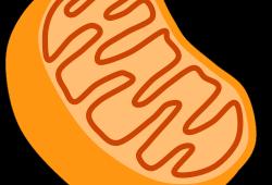 Nat Commun:不动也减肥?燃脂分子被发现