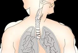 SCIENCE:III型干擾素在病毒識別時破壞肺上皮屏障?
