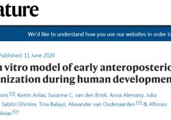"""Nature:科学家建立人类<font color=""""red"""">胚胎</font>三维模型,有望揭秘出生缺陷和不孕的原因"""