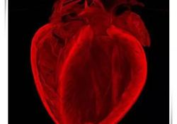 "JAHA: <font color=""red"">超重</font>儿童心脏较大,主要是因为肌肉多!荷兰研究"