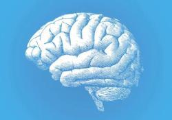 """Science   <font color=""""red"""">人类</font>""""作死""""实验:把这个<font color=""""red"""">人类</font>特有基因转入猴子后,它们的大脑更大更强了"""
