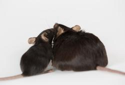 Journal of Hepatology:胖能毁三代!母亲肥胖会增加后代患肝癌的几率