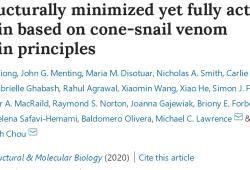 "Nat Struc Mole Bio:蜗牛的""致命毒液""成""救命良药"",迄今最小胰岛素有望彻底治疗糖尿病"