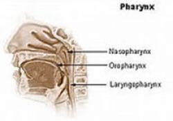 "Eur Arch Otorhinolaryngol:慢性咳嗽与<font color=""red"">上呼吸道</font>咳嗽综合症有关"