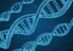 """Protein & Cell:<font color=""""red"""">中科</font><font color=""""red"""">院</font>发现,SIRT7作为异染色质稳定剂,拮抗人类干细胞衰老。"""