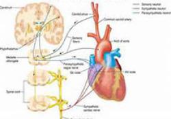 "JACC:不同心脏磁共振表现致<font color=""red"">心律</font>失常性右心室心肌病患者的预后研究"