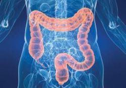 JCC: 阿片类药物在炎症性肠病中引起肠道营养不良并加剧结肠炎炎症