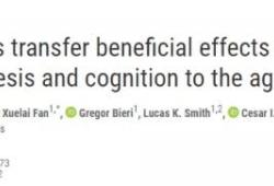 Science:新發現,運動可以預防大腦的衰老,不運動也可以?