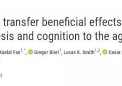 "Science:新发现,运动可以预防大脑的<font color=""red"">衰老</font>,不运动也可以?"