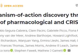 "Mol Syst Biol:<font color=""red"">药物</font>筛选结合CRISPR技术提高抗癌<font color=""red"">药物</font>疗效"