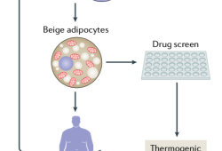 Nat Rev Endocrinol:糖尿病及肥胖症治疗的新方法:点燃产热的脂肪组织