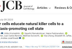 "JCB:癌细胞竟能 ""化敌为友"""