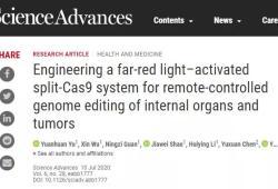 Sci Adv:华东师大叶海峰团队:研发出一种远红光激活的基因编辑系统——FAST