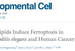 "Dev Cell:不饱和脂肪酸能抗癌?《Cell Press》独家解密潜在机制 ""铁死亡"""