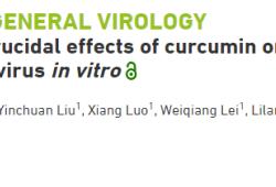 武漢科學家首次發現:姜黃素具有抗病毒特性,或可預防多種疾病
