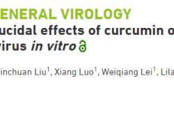 """武汉科学家首次发现:姜黄素具有抗病毒<font color=""""red"""">特性</font>,或可预防多种疾病"""