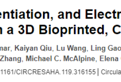 Circulation Res:首次!美國明尼蘇達大學:3D打印厘米級人類心臟泵,能夠正常運轉