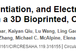 Circulation Res:首次!美国明尼苏达大学:3D打印厘米级人类心脏泵,能够正常运转